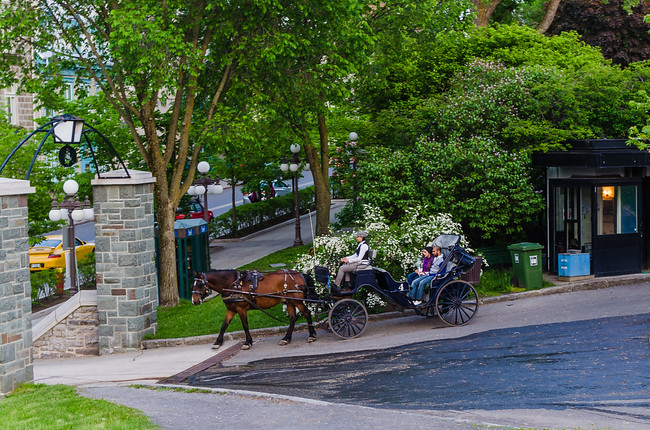 Quebec City Horse Drawn Carriage