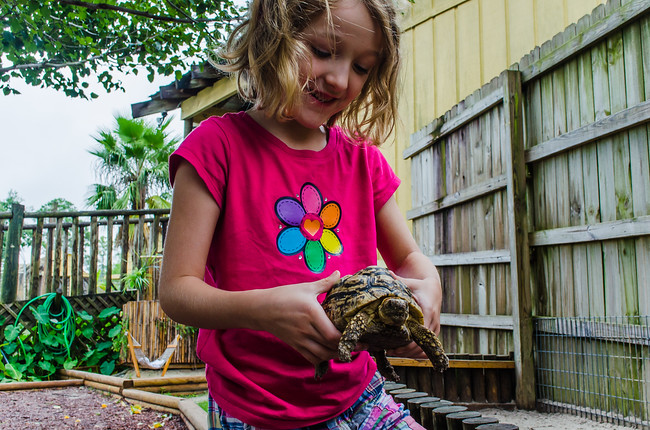 Holding a turtle at Gulf Shores Zoo