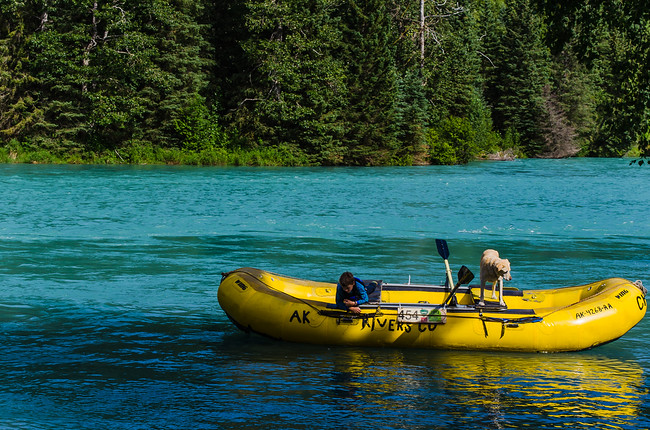 floating in a raft down the Kenai River with a dog
