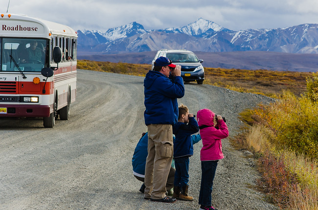 Animal watching in Denali National Park during Road Lottery