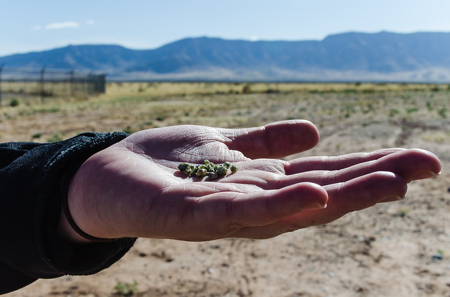 Radioactive trinitite held in the hand at the Trinity Site