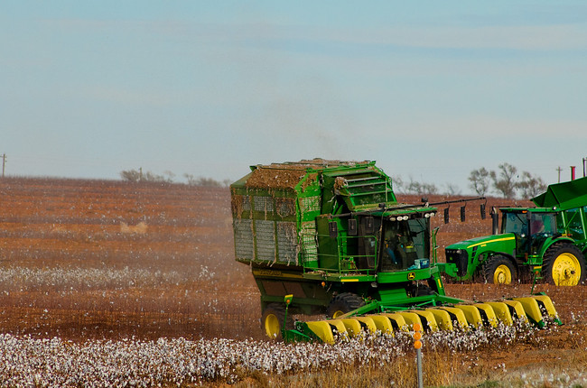 Texas fall cotton harvest machines on the farm