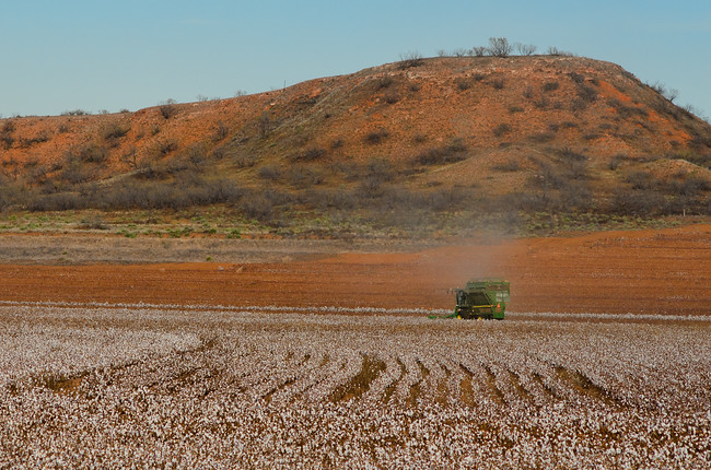 Fall cotton harvest in Texas with a cotton picker