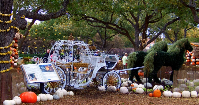 pumpkin carriage dallas arboretum texas