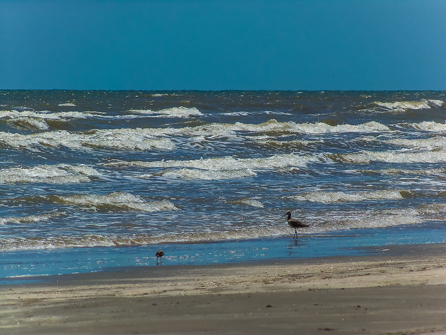 Texas Gulf Coast - Galveston State Park
