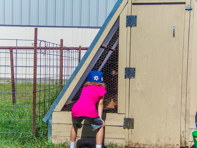 Girl looking into chicken coop at Homestead Farms in Keller Texas