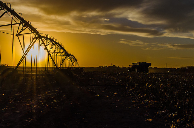 Sunset during Texas Corn Harvest