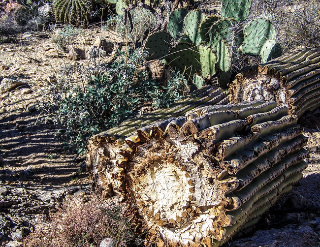 inside of a cactus